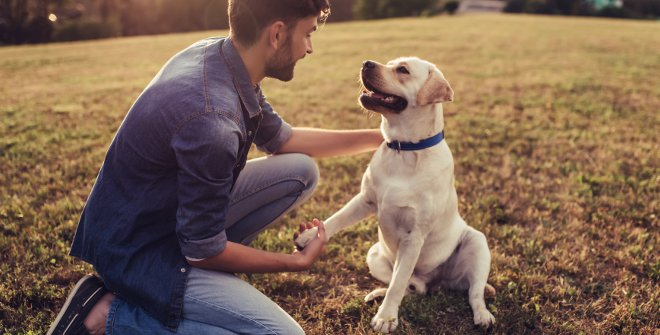 Eventos Pet Friendly ¿Por qué son tendencia?